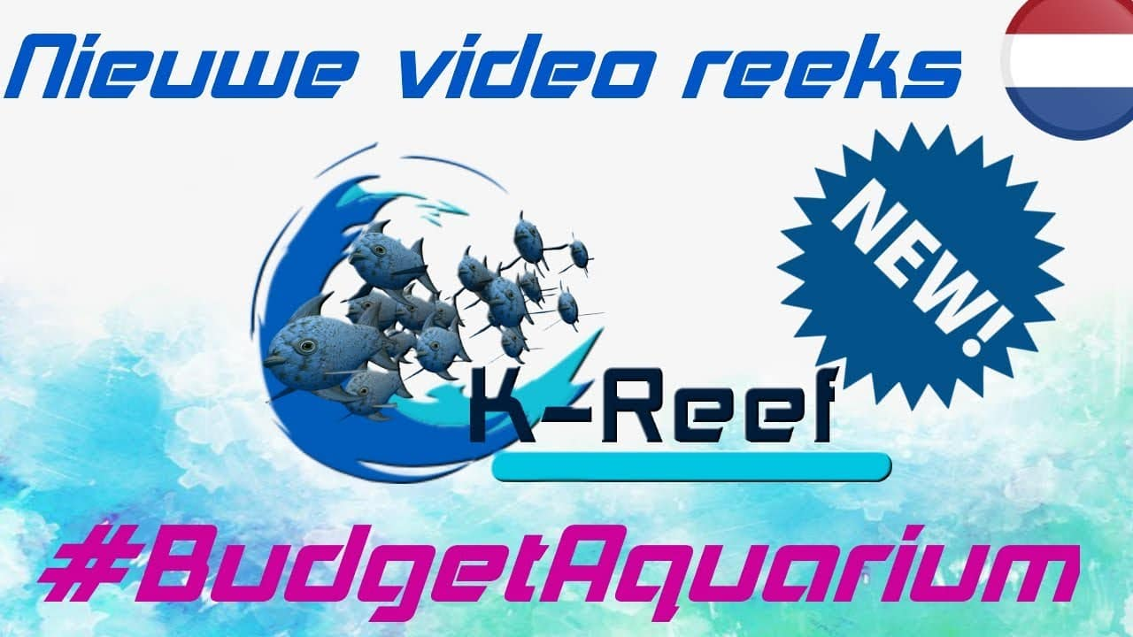 Opzetten van een Budget aquarium! 1