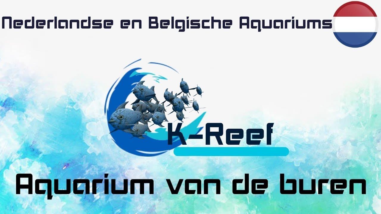 Zeewater aquarium van de buren 1