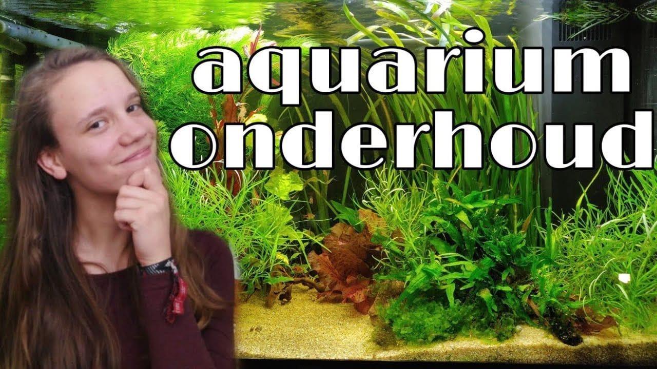 Aquarium onderhoud 1