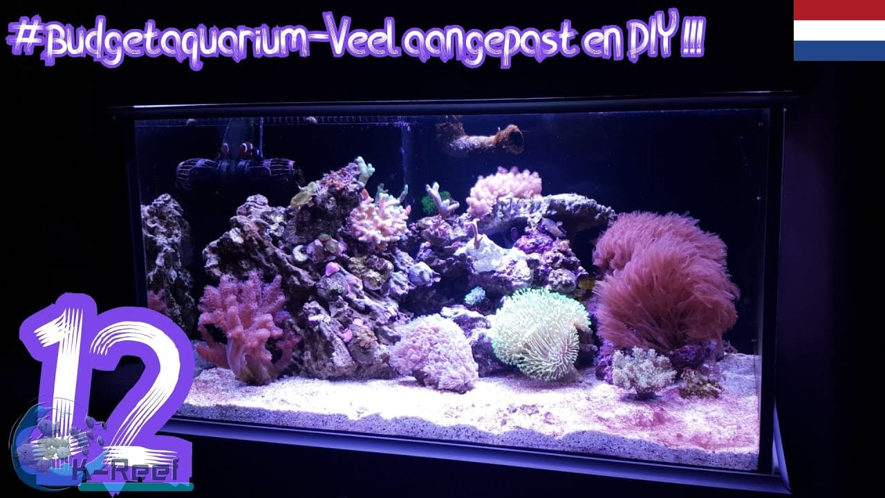 Budget aquarium deel 12 3