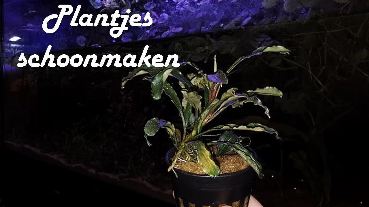Planten schoonmaken 2